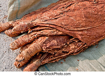 tobacco 123gfd - dried tobacco leaves forsale at the farmers...