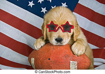 Football puppy - Golden retriever puppy wearing sunglasses...