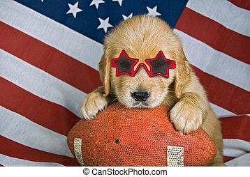 Football puppy - Golden retriever puppy wearing sunglasses...