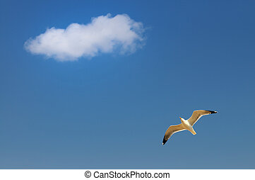 Sea gull and sky - Metaphor of freedom