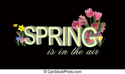 spring flowers animation with crocus, daffodils, tulips,