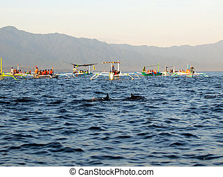 Dolphins and fisherman boats - Traditional balinese boat in...