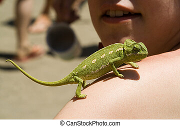 Chameleon, girl's, arm