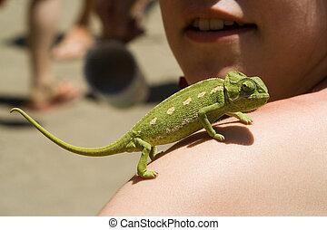 Ella/los/las de niña, brazo, camaleón