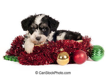 Powder-puff puppy - Cute Powder-puff puppy with Christmas...