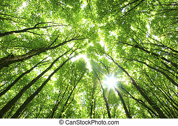 vert, Arbres, fond