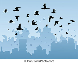 Birds over a city