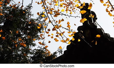 autumn_building_3.mov - maidenhair tree and chinese...