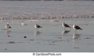 Seagulls On Beach - Seagulls on beach
