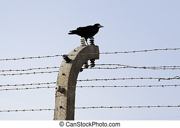 A lonely visitor. - A crow sitting on external line of...