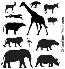 African animals - Vector illustration of various african...