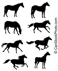 Horses - Vector illustration of various horses silhouettes
