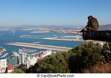 View over Gibraltar - One of the famous macaque apes is...
