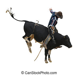 Fresian Bucking Bull with Cowboy isolated with cli[pping...