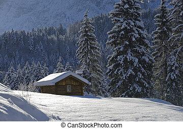 Solitário, cabana, floresta