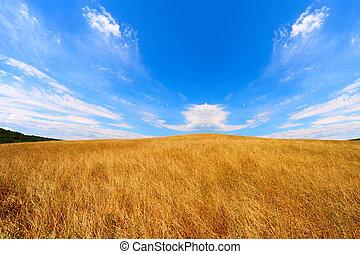 Wavy Hills