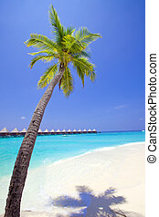 Maldives Palm tree bent above waters of ocean