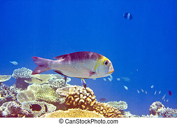 Indian ocean. 