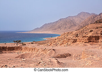 Sinai coast. Red Sea. Egypt.
