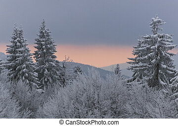 winter forest - a winter forest and sky after sunset