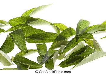 caril, folhas, isolado