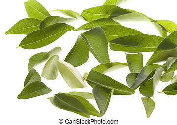 Curry Leaves Isolated - Isolated macro image of curry...