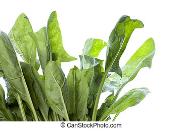 Spinach Isolated - Isolated image of fresh spinach