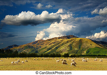 Mountain landscape with grazing sheep and cloudy sky