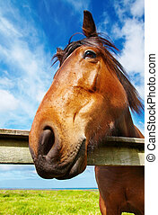 Horse head closeup against blue sky background