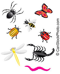 beetles and insects colors illustration