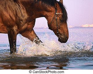splashing bay horse