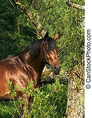 bay horse near the tree
