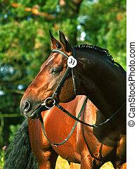 portrait of beatiful stallion outdoor
