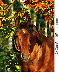 autumn  portrait of bay horse sunny day