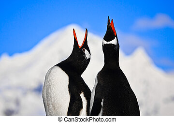 Penguins singing on a rock in Antarctica. Mountains in the...
