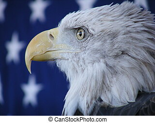Eagle - Proud image of eagle with American flag