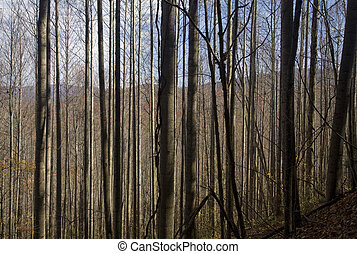 Autumn, Pisgah NF - Autumn, Pisgah National Forest, NC