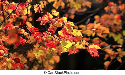 Colorful Red and Yellow Autumn