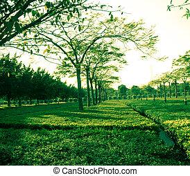 verde, capim, árvore