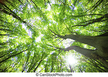 forest - Early morning sun in the green forest...