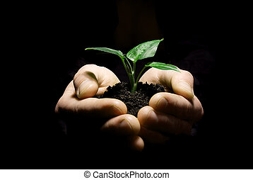 hands holding sapling - Hands holding sapling in soil on...