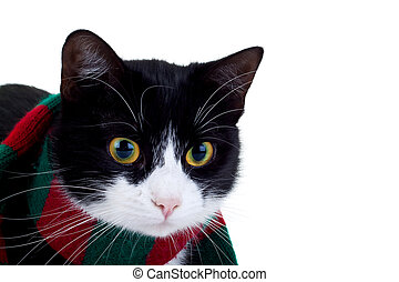 cat wearing a christmas scarf