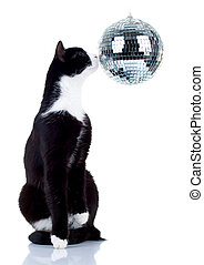 disco cat - picture of a cute cat playing with a disco ball