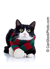 cat wearing a red and green scarf