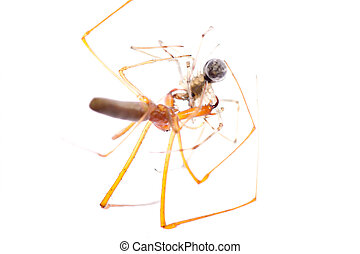 animal spider fight isolated