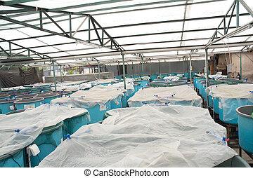 winter aquaculture hothouse - winter agriculture aquaculture...