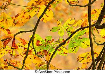buckeye leaf cluster 01
