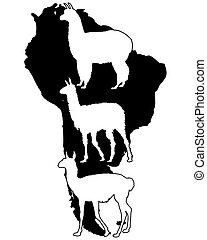 Lama, Guanaco, Alpaca