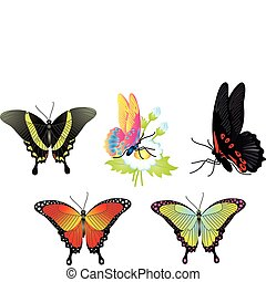 Butterfly. Vector collection