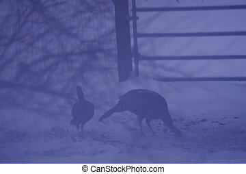 Ghosts of Turkeys Past - Turkeys at Dusk in Snow Storm...